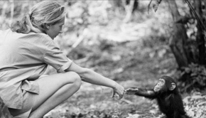 Biographies for kids - Jane Goodall
